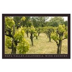Old Growth Vineyard Napa Valley Large Poster