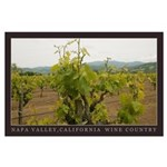 Old Growth Vines, Napa Valley LG Poster