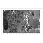 black + white wine country grapes large posters