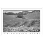 black + white wine country mustard bloom lg poster