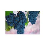 Ripe Grapes Rectangle Magnet (100 pack)