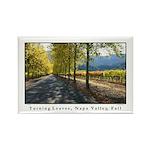 Tree Lined Vineyard Road, Napa Valley Magnets