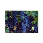 Ripe Grapes on the Vine, 10 Photograph Magnets