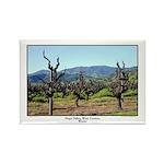 Wine Vineyard, Winter - Photography Travel Magnets