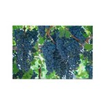 Ripe Grapes Hanging on the Vine Rectangle Magnet