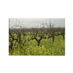 Mustard Blooms in a Winter Vineyard - Magnets Rect
