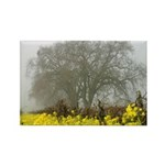 Napa Valley Mustard Flowers In Bloom Magnet