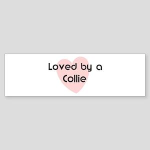 Loved by a Collie Bumper Sticker