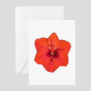 Amaryllis Red Flower Greeting Card