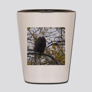 Bald Eagle #01 Shot Glass