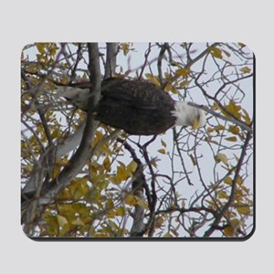 Bald Eagle #01 Mousepad