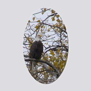 Bald Eagle #01 22x14 Oval Wall Peel