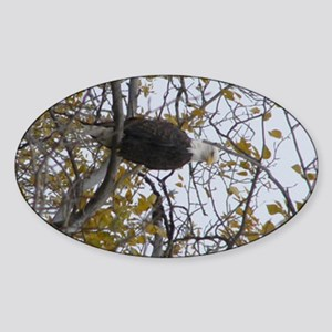 Bald Eagle #01 Sticker (Oval)