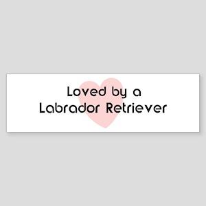 Loved by a Labrador Retriever Bumper Sticker