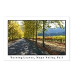Turning Leaves, Napa Valley Postcards (Pack of 8)