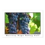 Harvest, Napa Valley, Fall Postcards (Pack of 8)