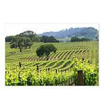 Napa Valley Vineyard Postcard (package of 8)