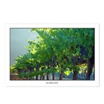 Backlit Vineyard Postcards (Package of 8)