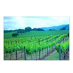 Spring Vineyards Postcards (Package of 8)