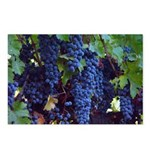 Ripe Napa Grapes Postcards (Package of 8)