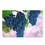 Napa Valley Grapes Postcards (Package of 8)