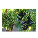 Modern Grapes Postcards (Package of 8)