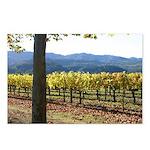 Vineyard Turning Leaves Postcards (Package of 8)