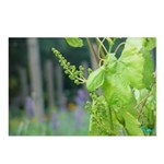 Grape Buds Postcards (Package of 8)