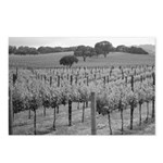 Black+ White Vineyards Postcards (Package of 8)