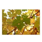 Turning Leaf Postcards (Package of 8)