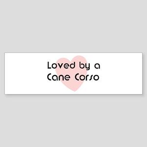 Loved by a Cane Corso Bumper Sticker