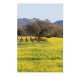 Napa Mustard Greeting Cards Postcards (Package of