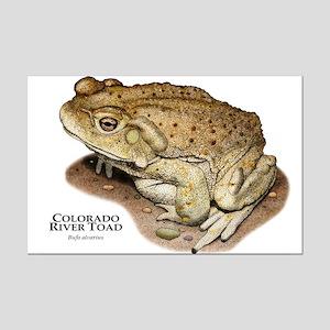 Colorado River Toad Mini Poster Print