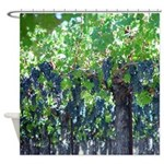 Grapes Hanging Under Vines Shower Curtain