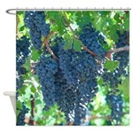 Bunches of Grapes - Shower Curtain