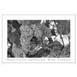 Napa Valley Wine Country Ripe Grapes BW Poster