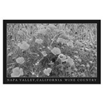 California Poppies in Black and White Poster
