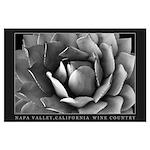 California Succulent Echeveria Large Poster