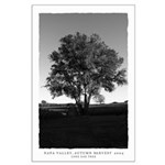 black and white lone oak tree poster