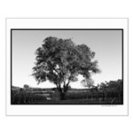 lone oak tree Small Poster black + white