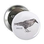 American Crow - 2.25
