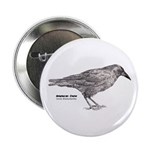 American Crow - Button
