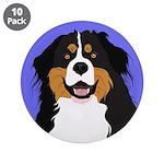 Bernese Mountain Dog 3.5