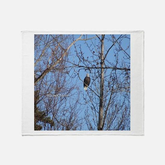 Bald Eagle #02 Throw Blanket