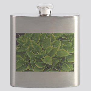 Lush green hosta leaves Flask