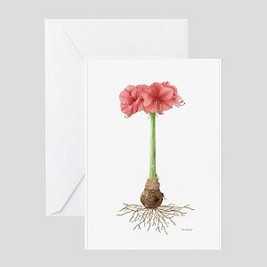 Amaryllis Botanical Greeting Card