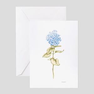 Hydrangea Botanical Greeting Card