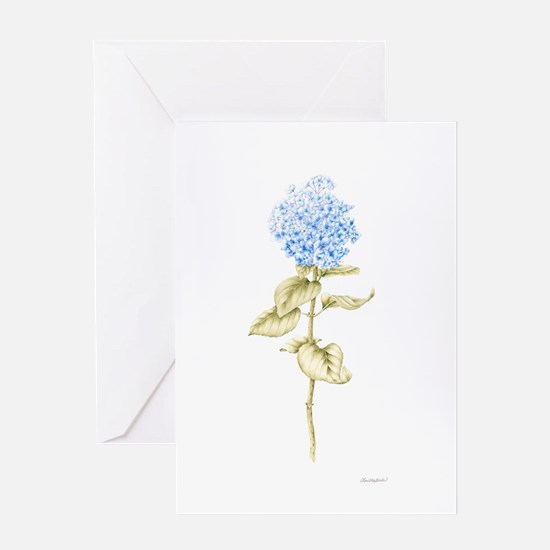 Hydrangea Botanical Greeting Card