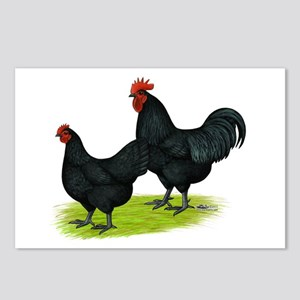 Australorp Chickens Postcards (Package of 8)