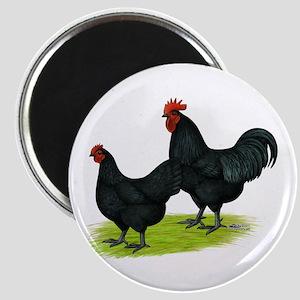 Australorp Chickens Magnet